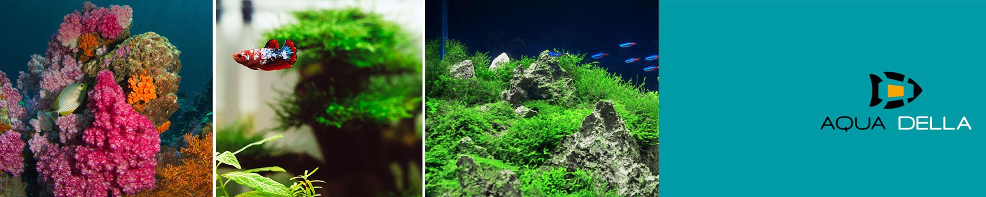 Aqua Della Aquarium Dekoration