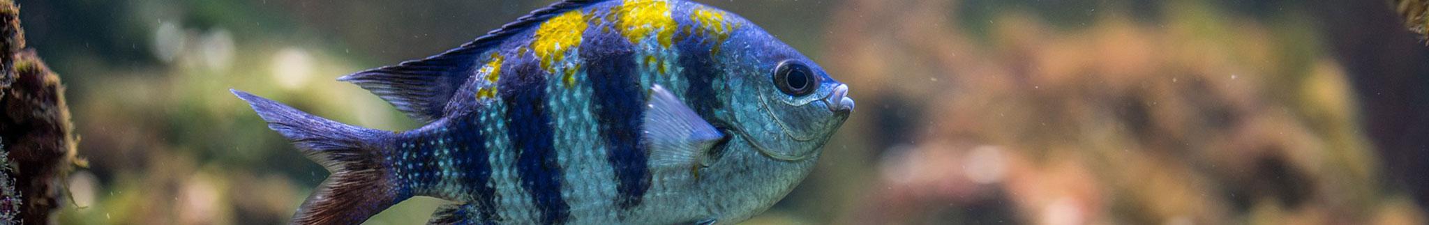Aquarium Shop: Aquaristik Zubehör günstig, Bild 1