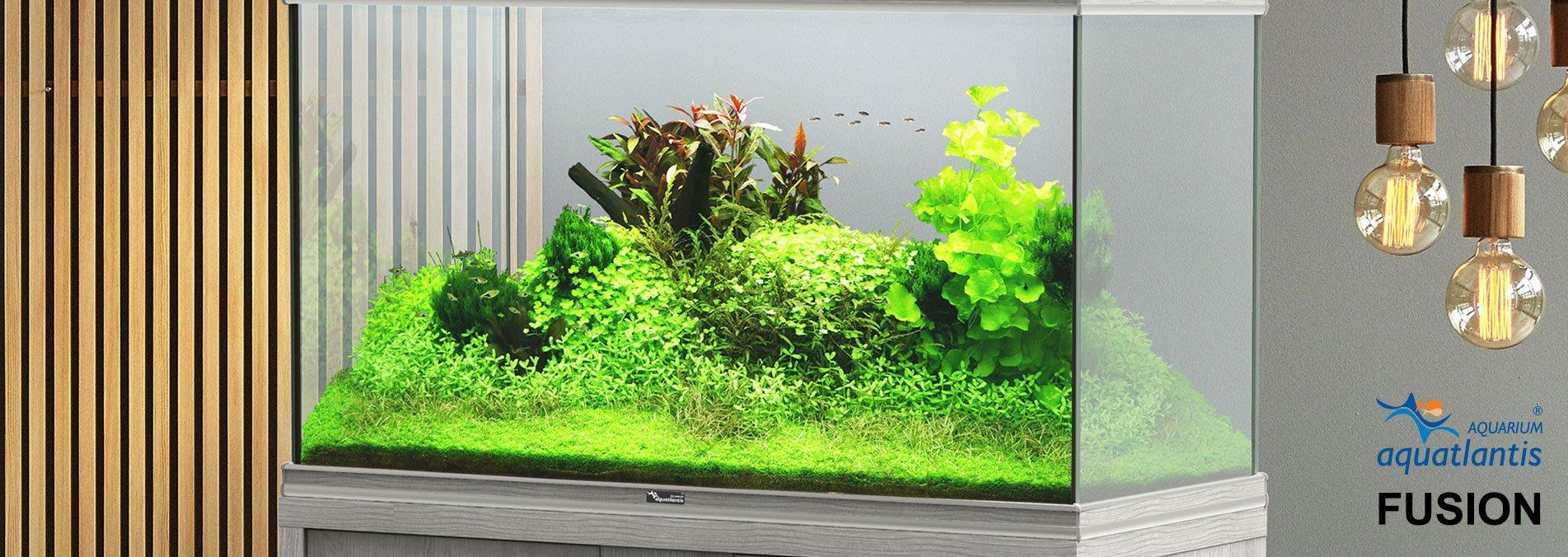 Aquatlantis Fusion Aquarien, Bild 2
