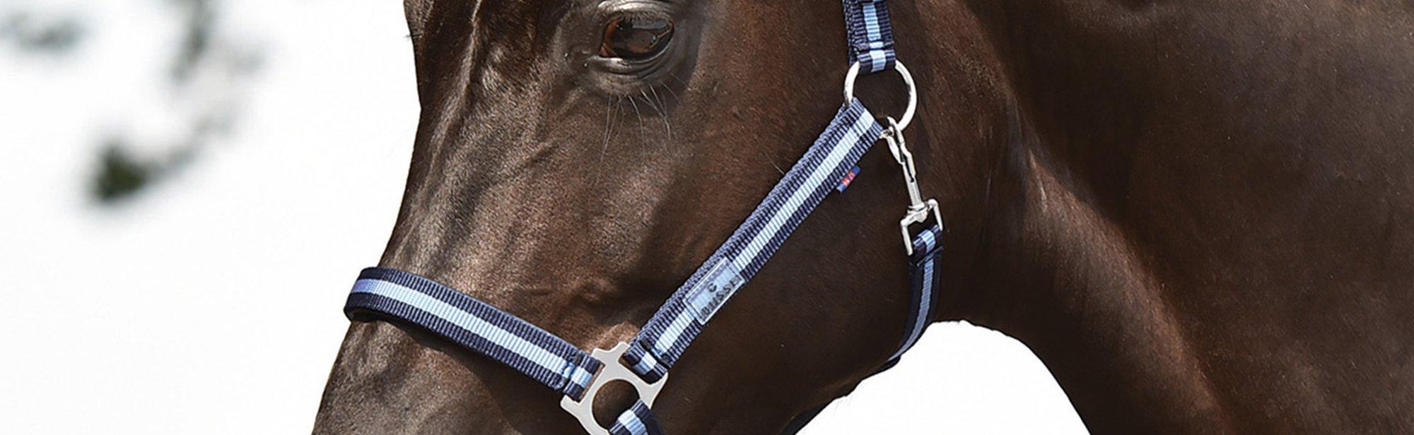 BUSSE Pferdehalfter