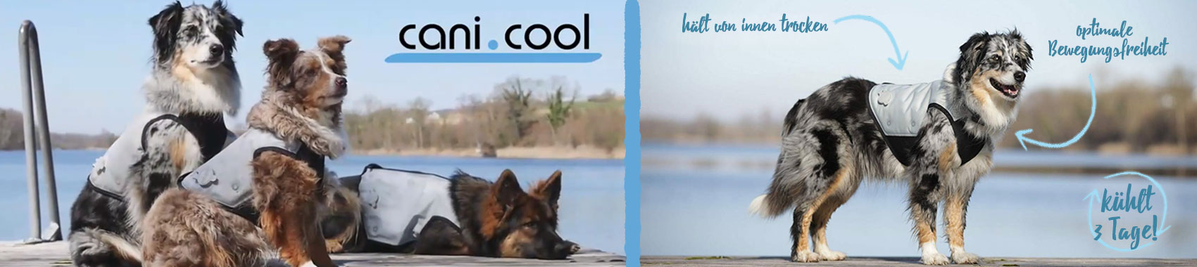 Hunde bei Hitze abkühlen, Bild 3