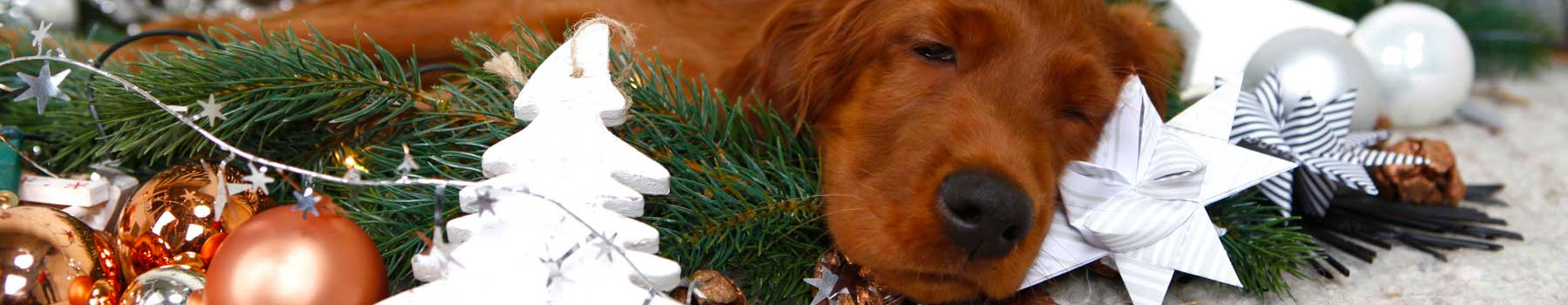 Weihnachten Weihnachtsmarkt und Weihnachtsgeschenke für Hunde