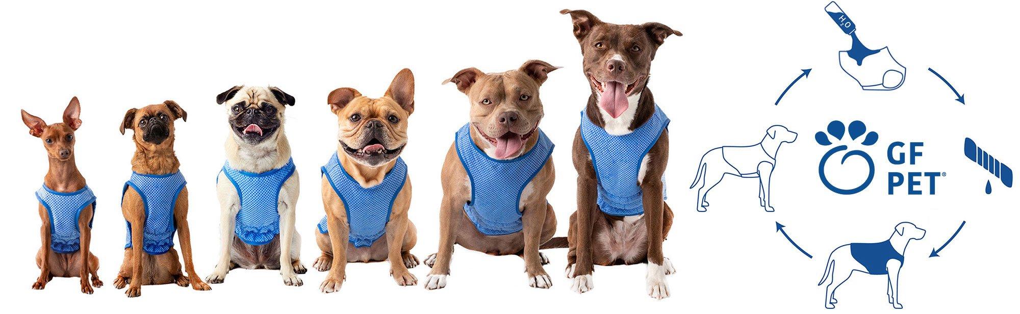GF Pet Hundebekleidung, Bild 1