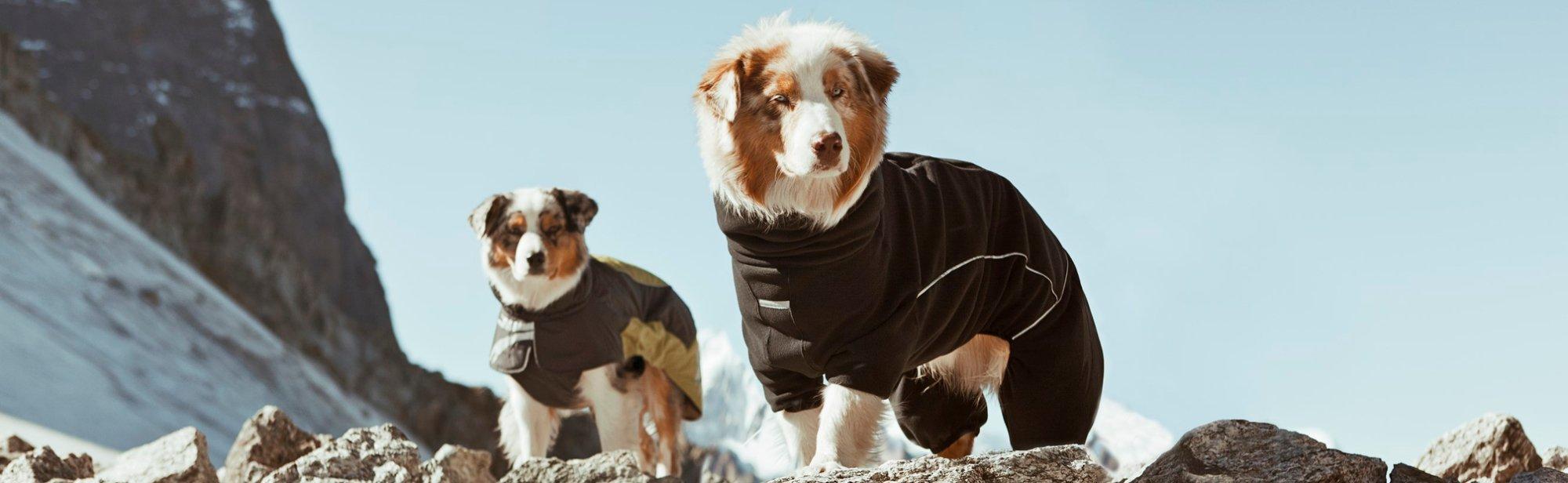Wintermäntel für Hunde günstig