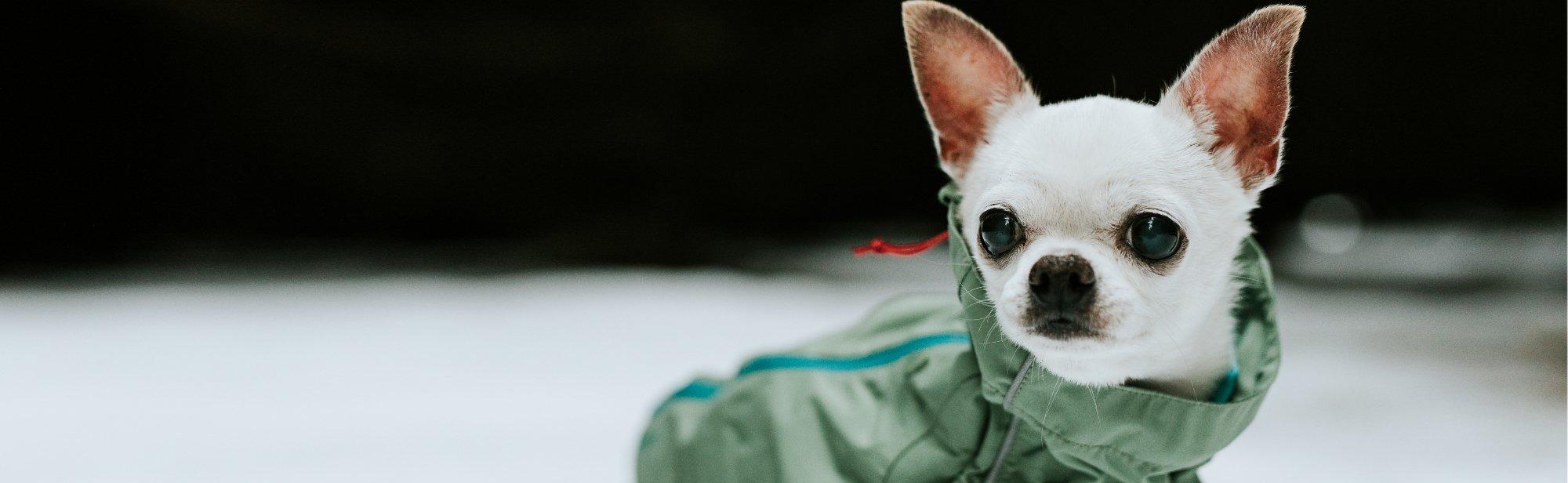 Regenmäntel für Hunde Hunderegenmäntel günstig