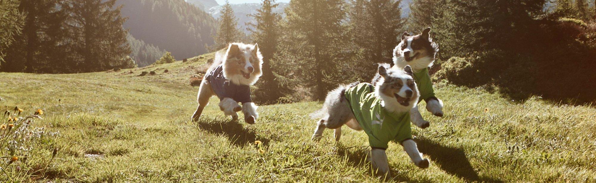Softshelljacken für Hunde