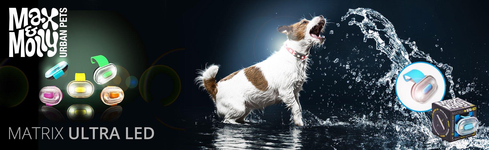Leuchthalsbänder, Blinkhalsbänder, reflektierende Hundehalsbänder online bestellen, Bild 1