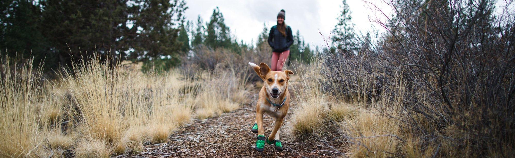 Hundeschuhe Pfotenschuhe für Hunde günstig