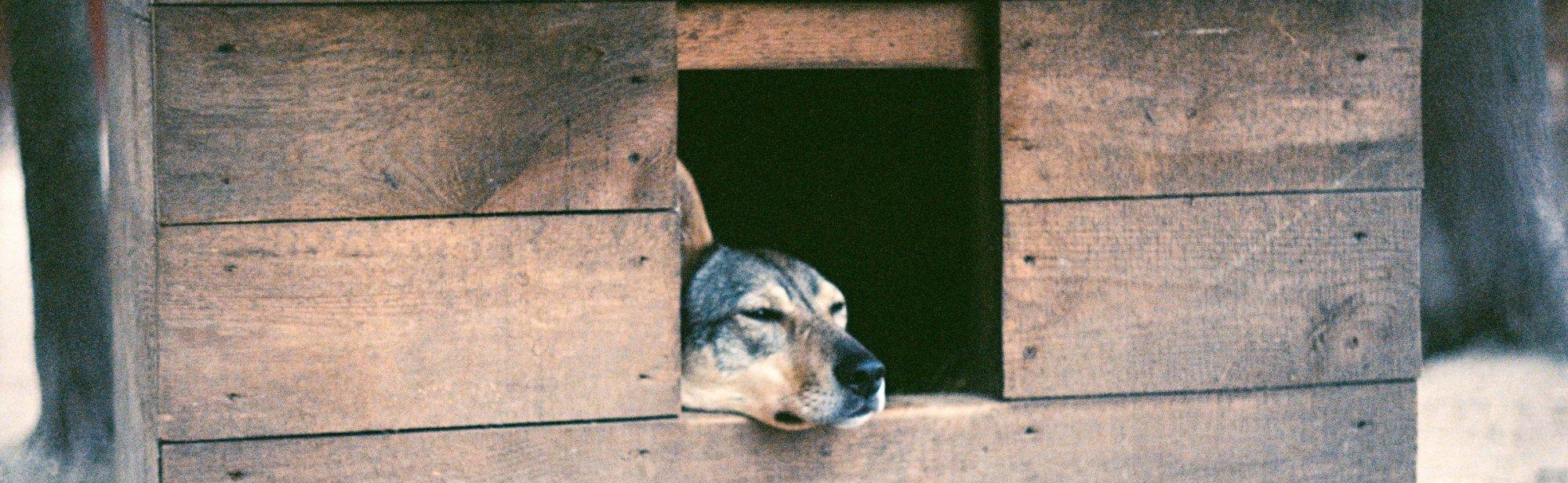 Hundehäuser günstig online bestellen