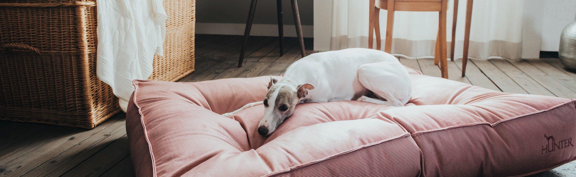 Hundeschlafplätze günstig kaufen