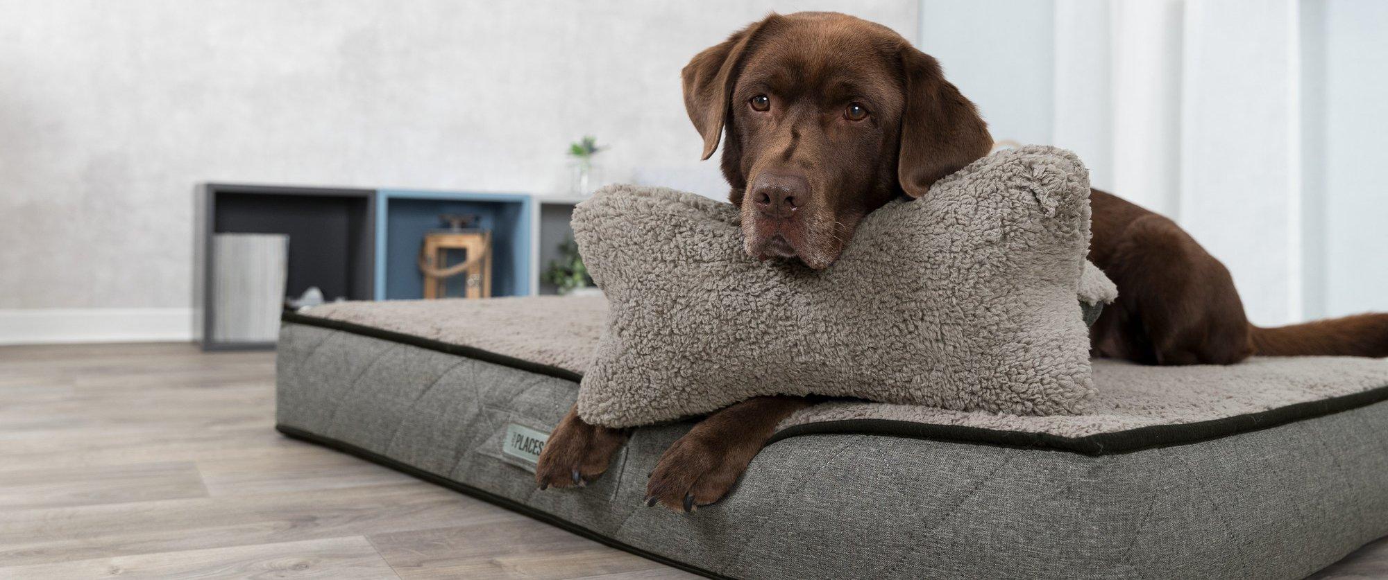 Orthopädische Hundebetten online kaufen