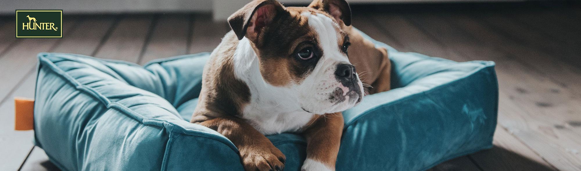 Hunter Hundekissen online bestellen