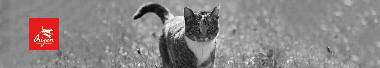 Orijen Katzenfutter getreidefrei günstig online bestellen