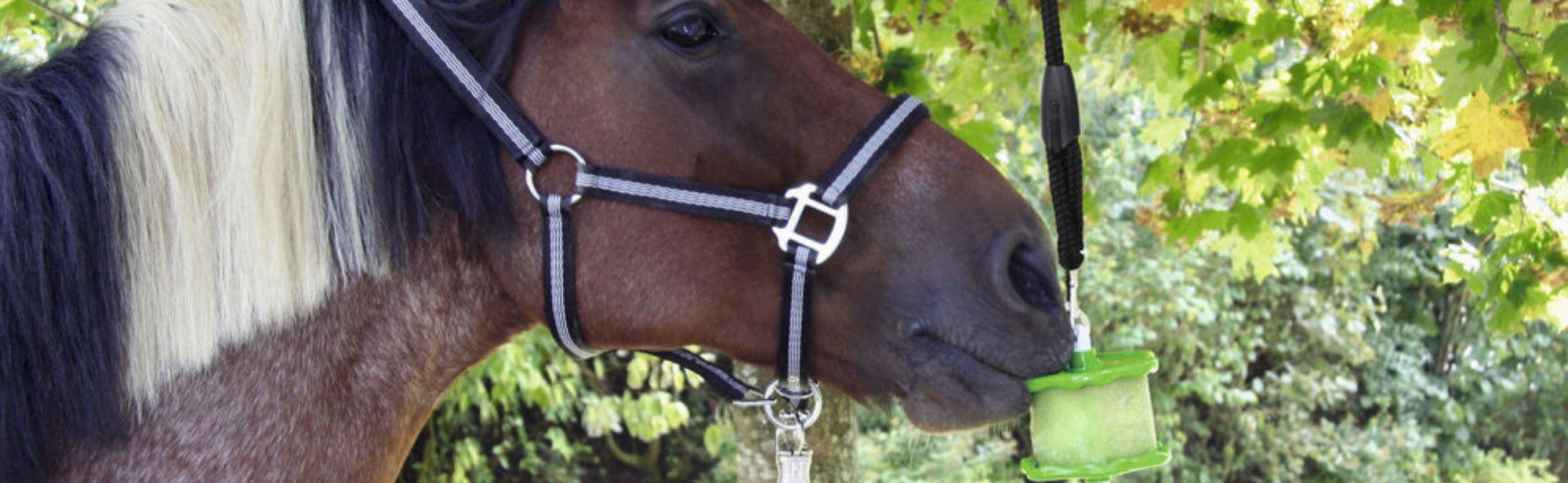 Pferde Lecksteine