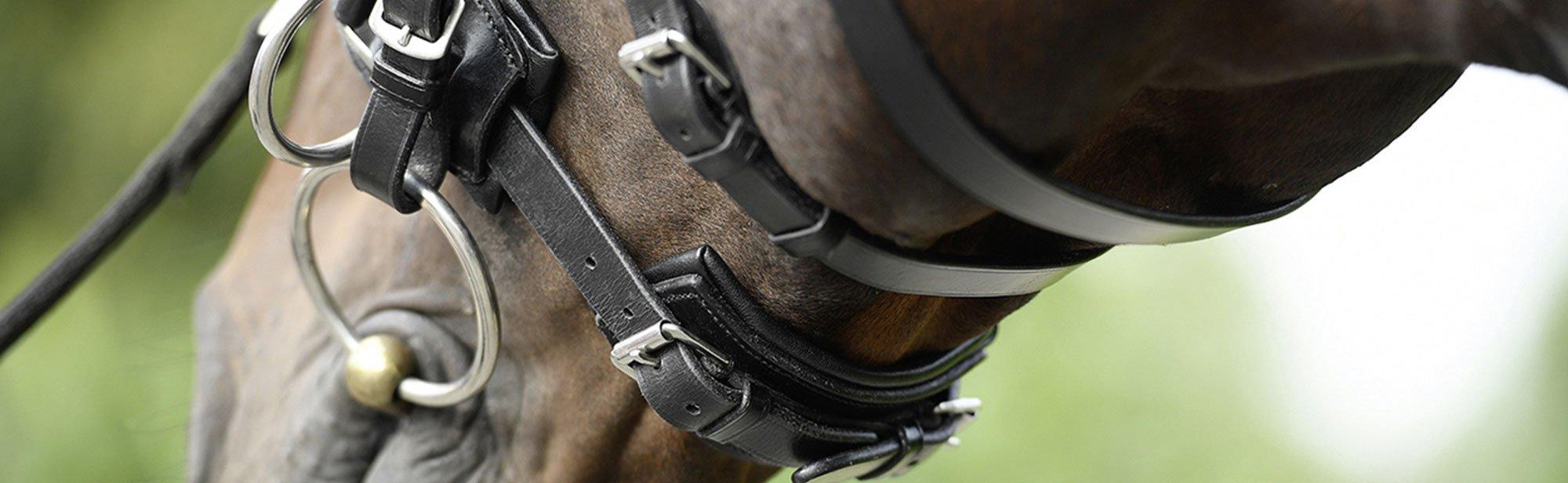 Trensen für Pferde günstig online bestellen, Bild 2