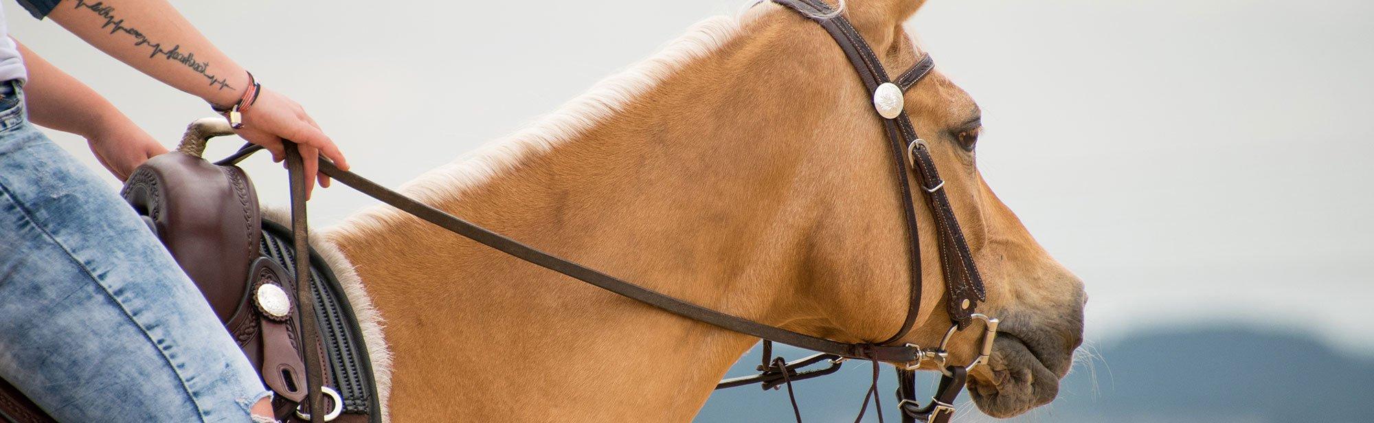 Zügel & Hilfszügel für Pferde