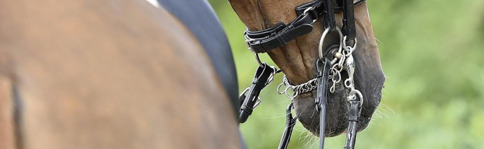 Kandaren für Pferde