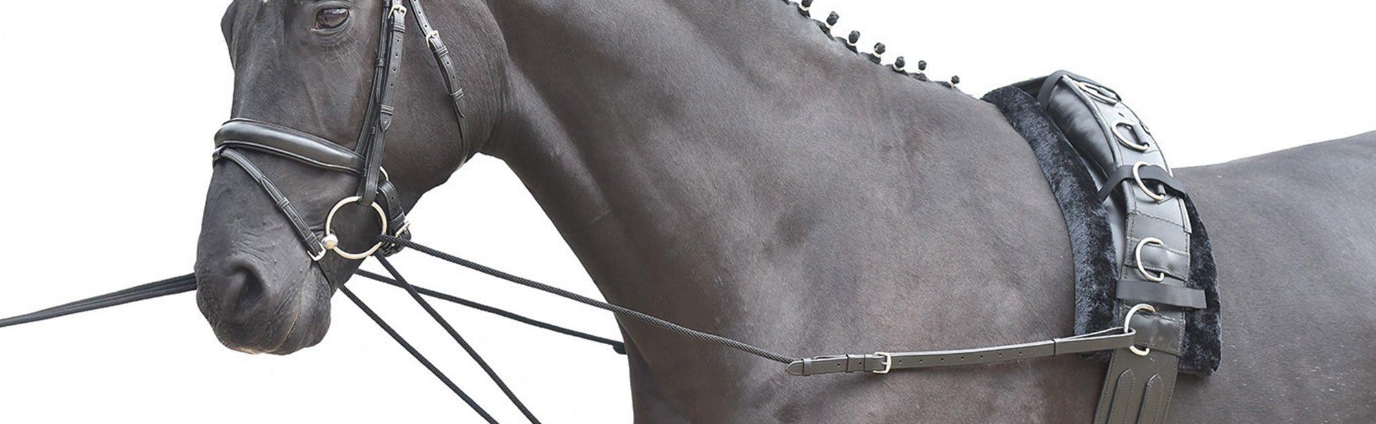 Hilfszügel zum Reiten und Longieren, Hilfszügel für Pferde