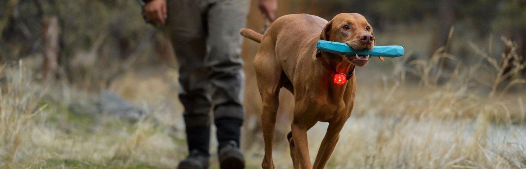 Hundesicherheit von Ruffwear