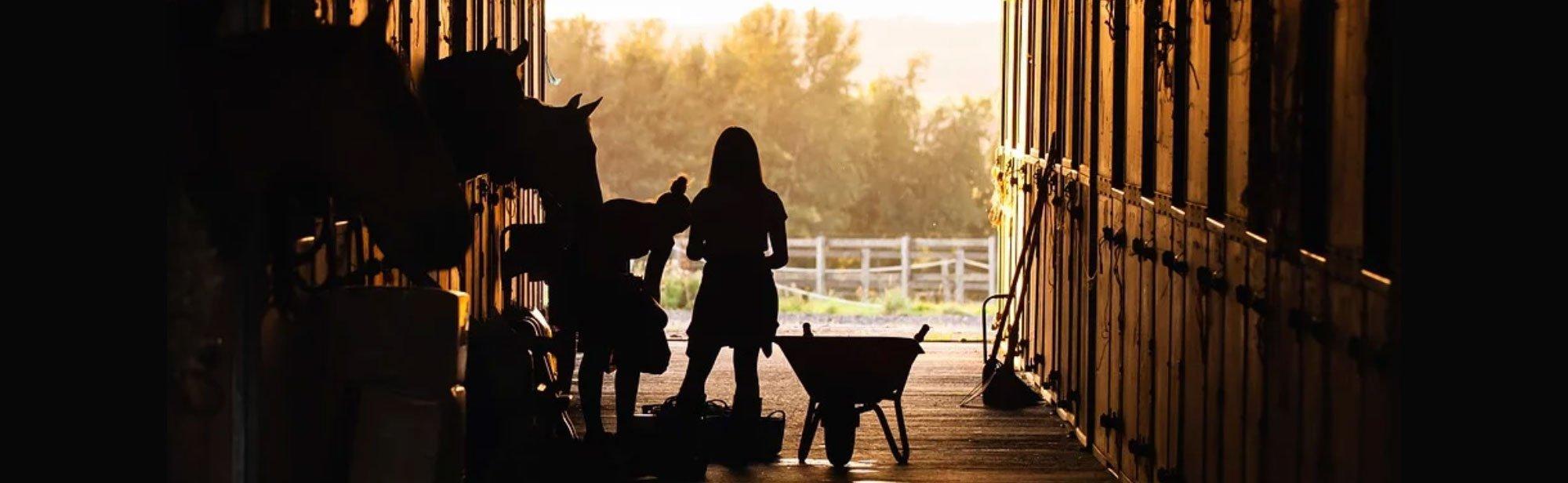 Stallzubehör Pferde