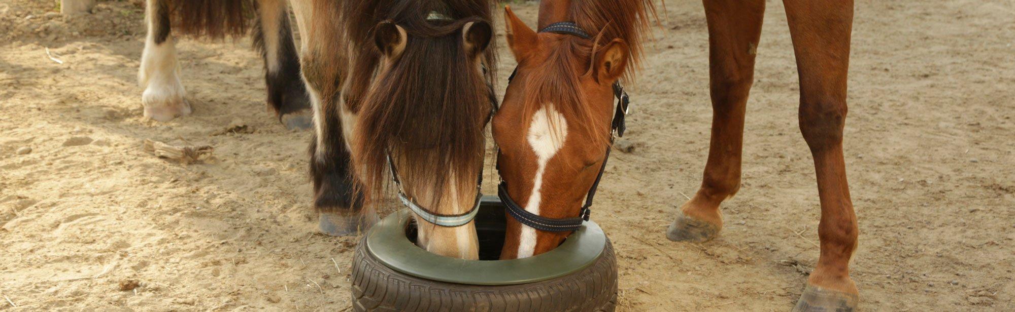 Stallzubehör für die Pferde-Fütterung