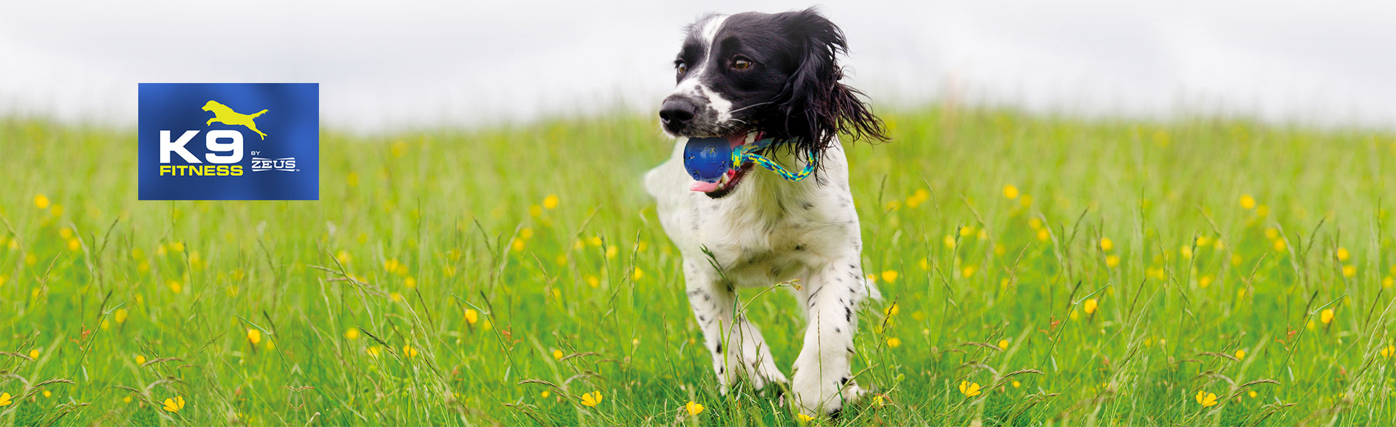 Zeus K9 Fitness Hundespielzeug