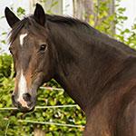Pferdeshop, Pferdezubehör