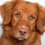Hundeshop, Hundezubehör
