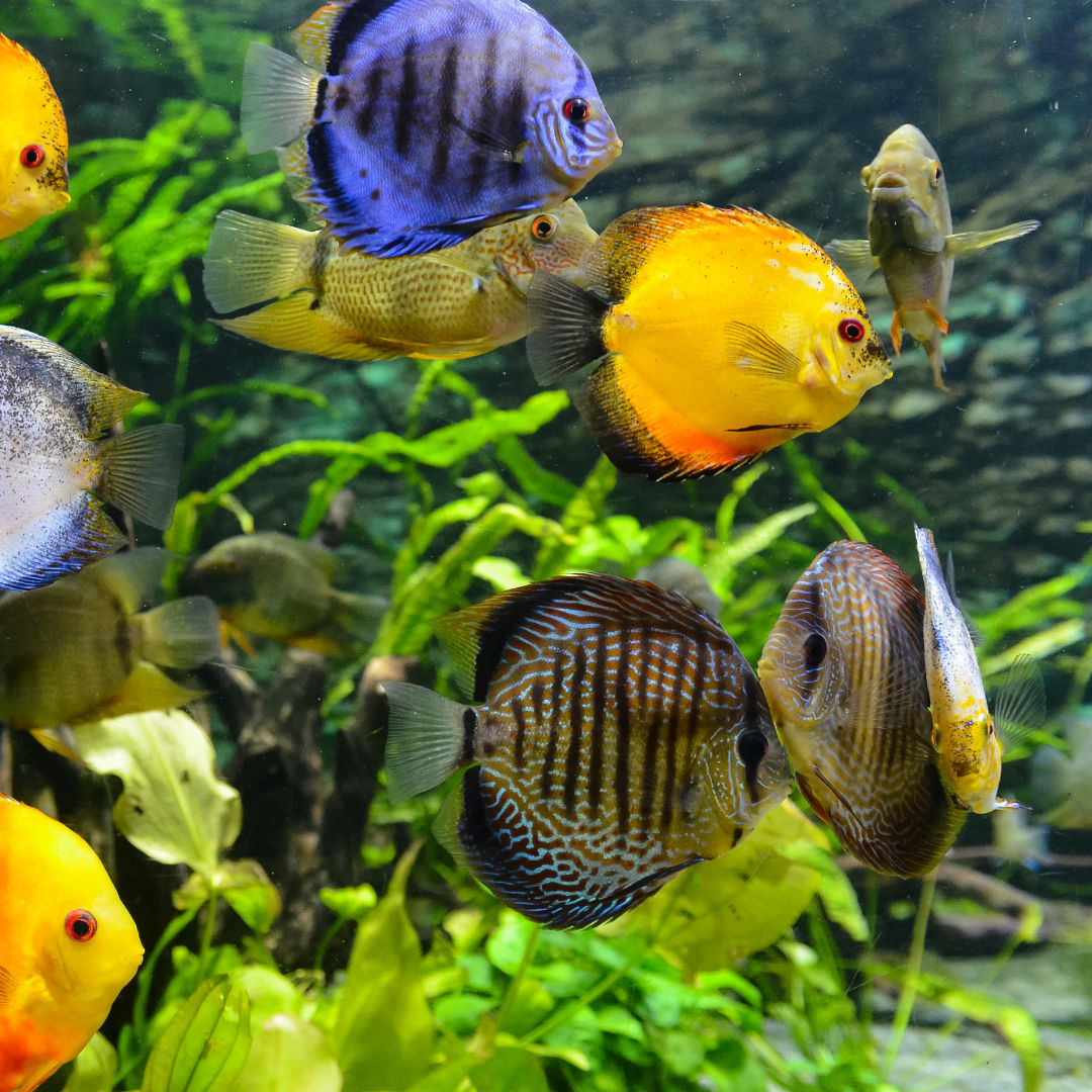 Aquarium Shop, Aquaristik