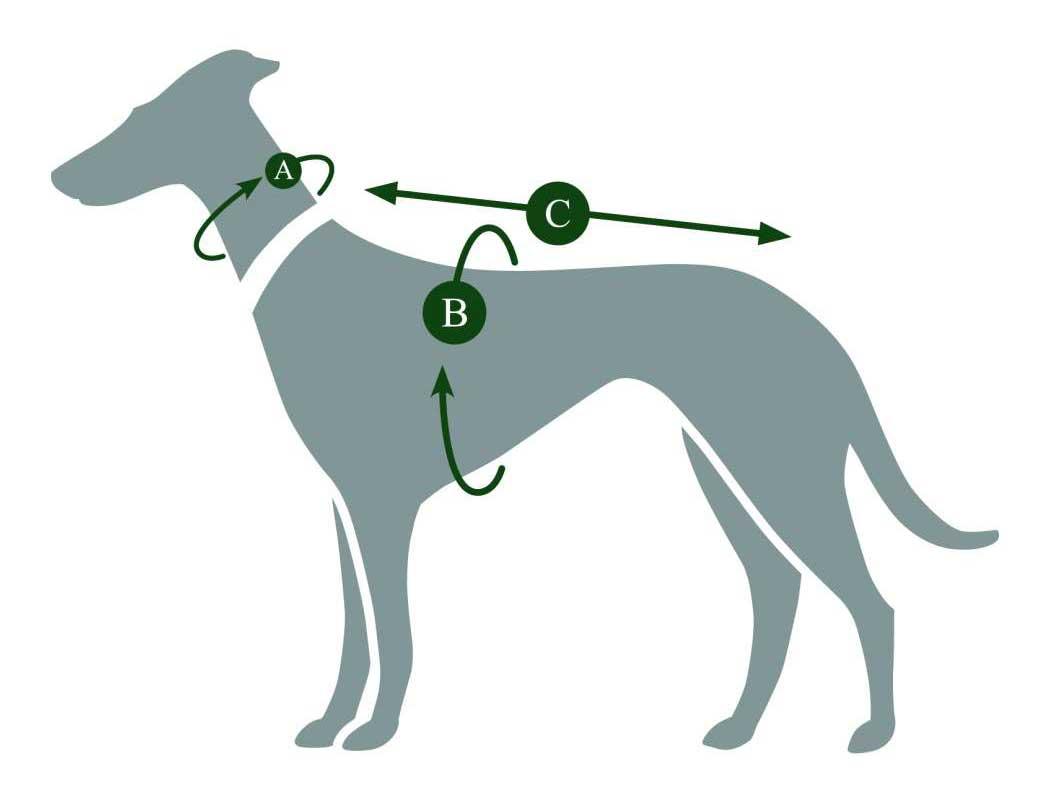 Hundemantel richtig ausmessen