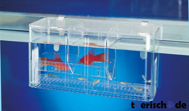 TRIXIE Ablaichkasten Aquarium 8049, Bild 2