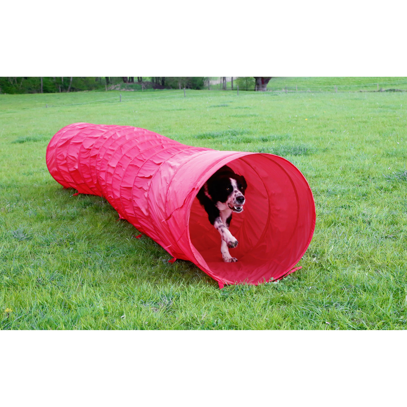 Kerbl Agility Hundetunnel rot, 5m, Bild 8