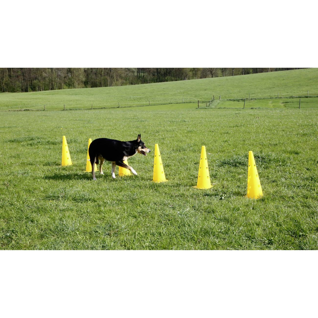 Kerbl Agility Pylonen-Hürden Set für Hunde, Bild 3