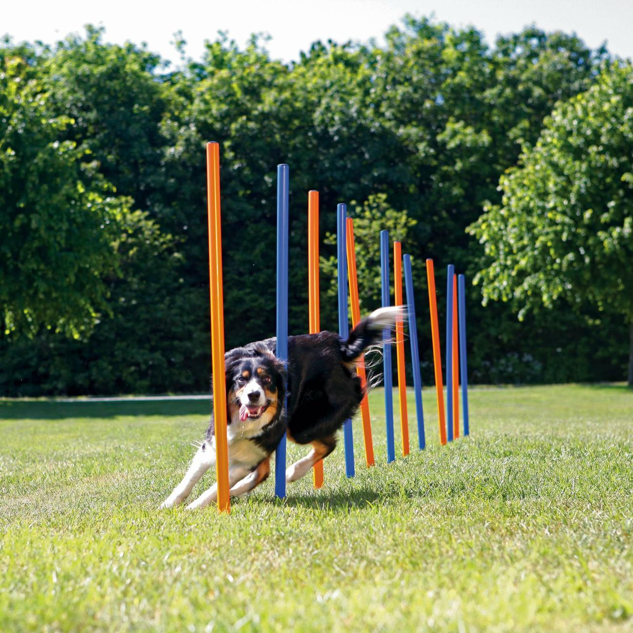 Trixie Agility Slalom Stangen für Hunde, 12 Stangen, 115 x ø 3,3 cm