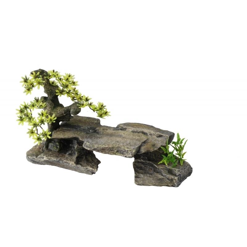 Aqua Della Bonsai auf Stein, Bild 3