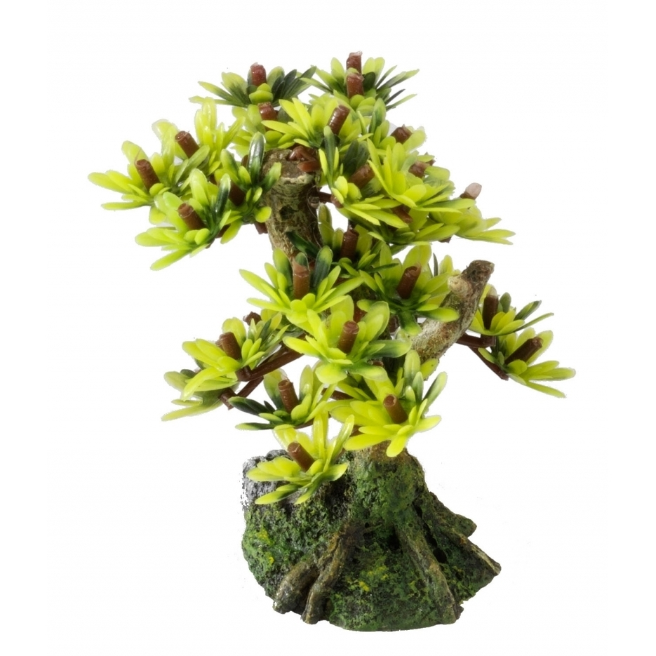 EBI Aqua Della Bonsai Bäume, Bonsai S - Sort C (9,5cm)