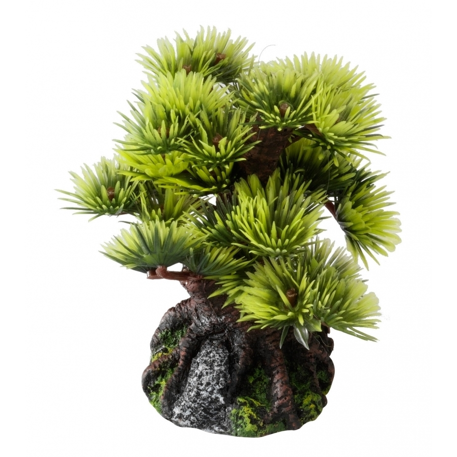 EBI Aqua Della Bonsai Bäume, Bonsai S - Sort B (9,5cm)