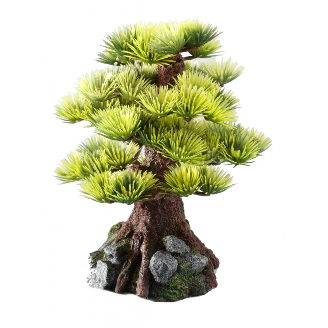 EBI Aqua Della Bonsai Bäume, Bonsai M - Sort C (15cm)