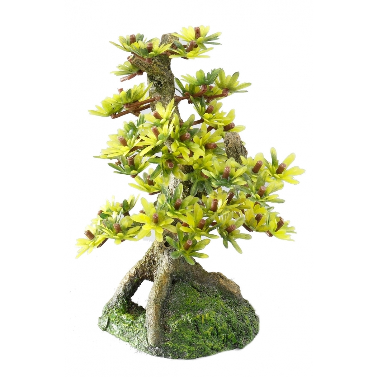 EBI Aqua Della Bonsai Bäume, Bonsai M - Sort B (15cm)