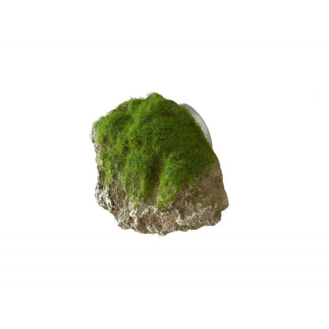 Aqua Della Moss Stone Stein mit Moos Preview Image