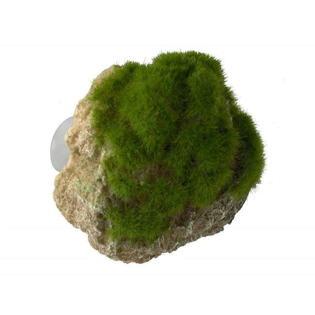 Aqua Della Moss Stone Stein mit Moos, Bild 3
