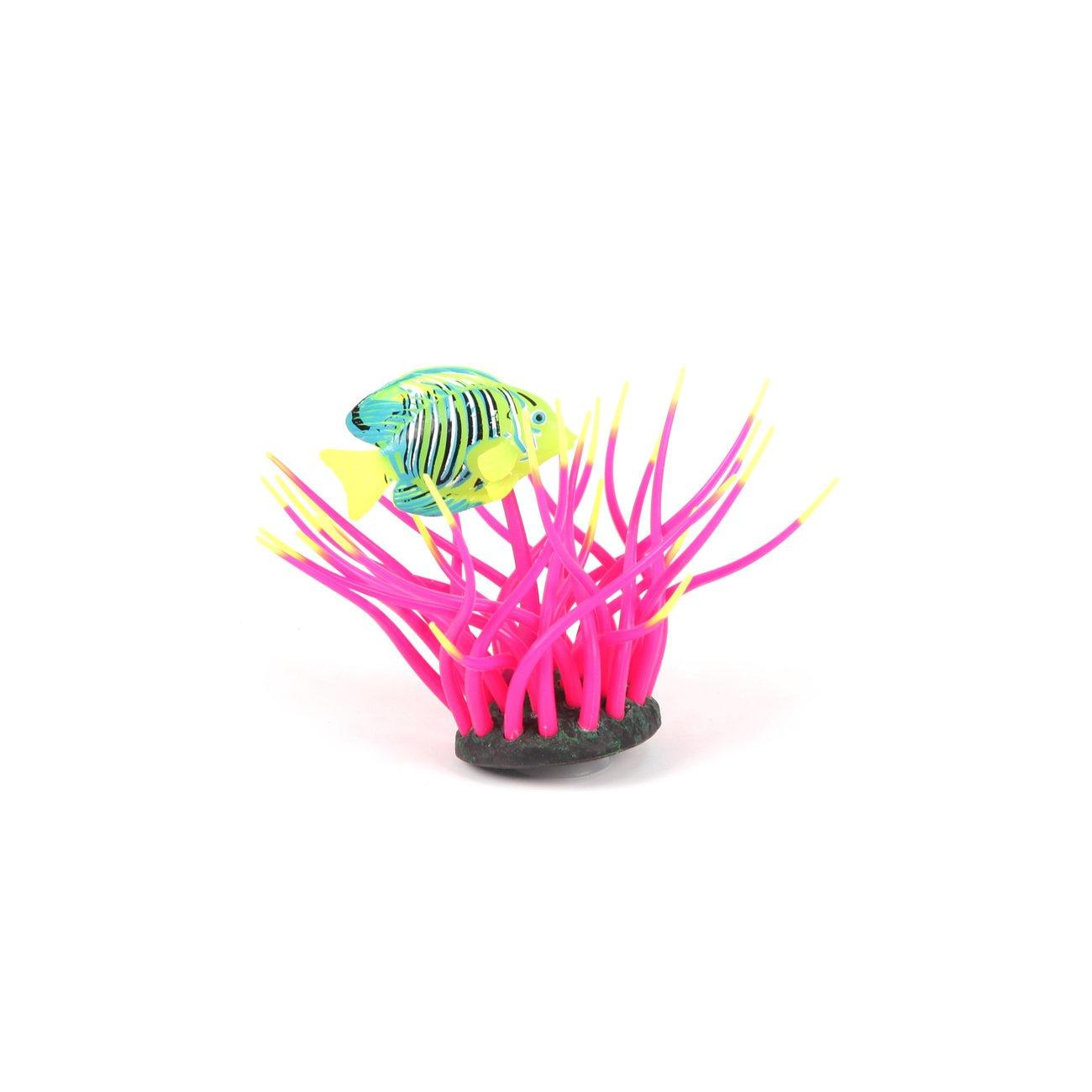 Aquatlantis Aqua Glow Anemone, mit Doktorfisch, rosa