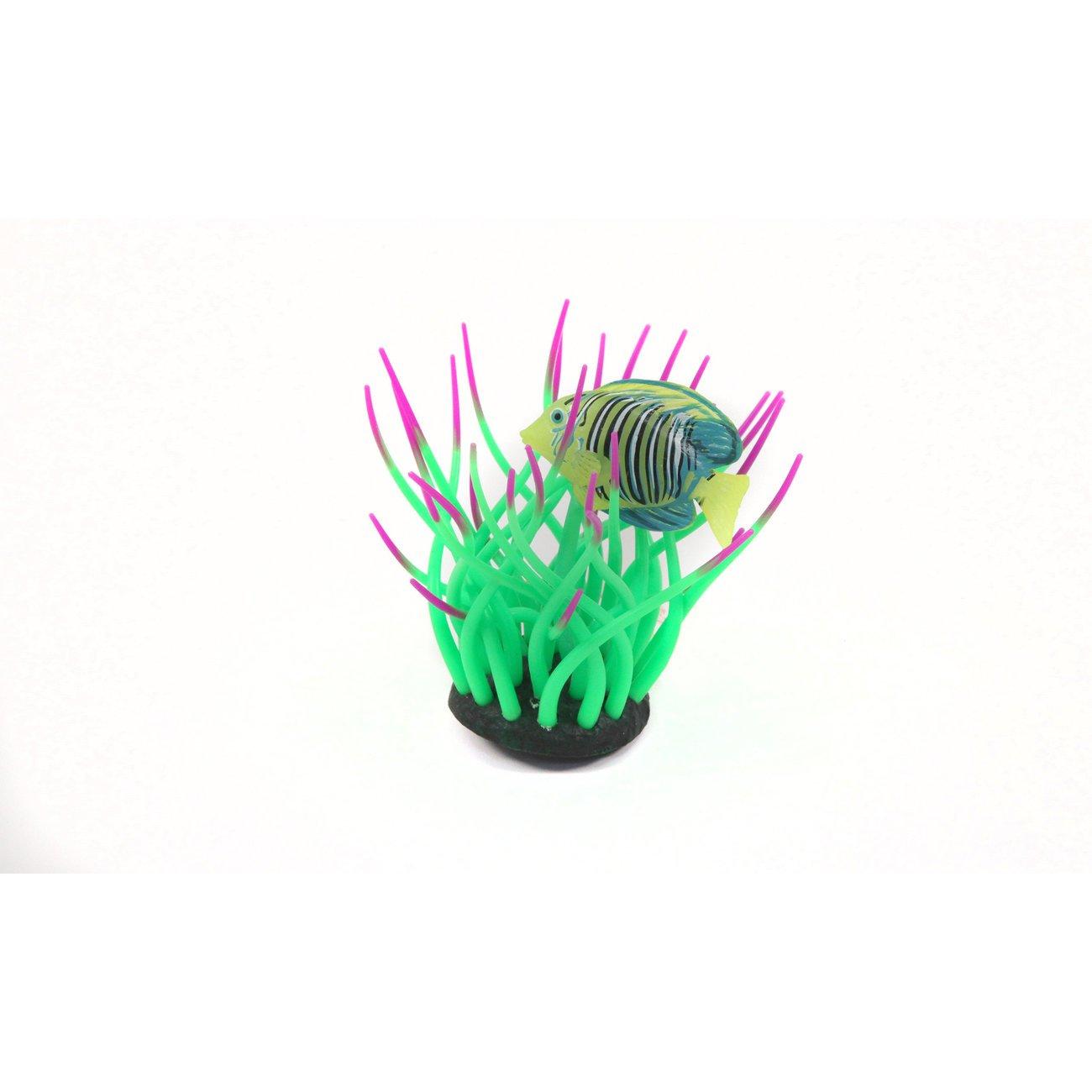 Aquatlantis Aqua Glow Anemone, mit Doktorfisch, grün