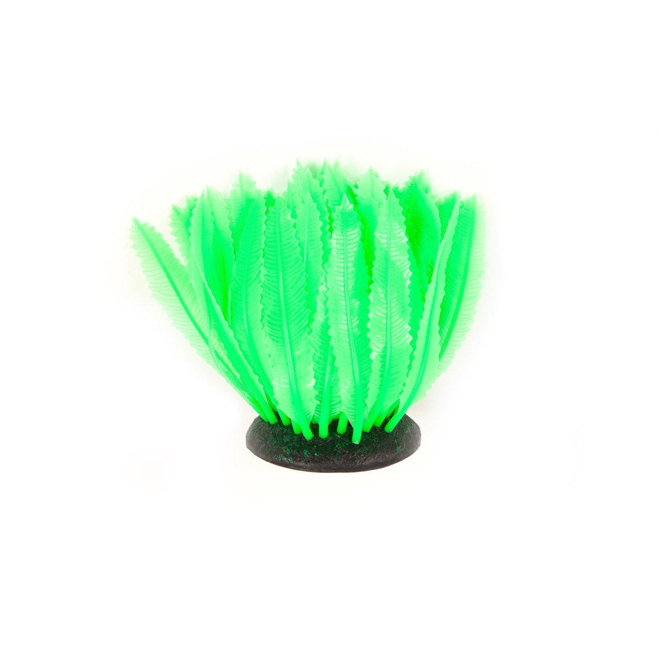 Aquatlantis Aqua Glow Farn Preview Image