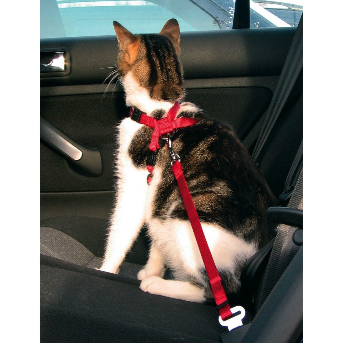 Trixie Autogeschirr Sicherheitsgurt für Katzen 1294