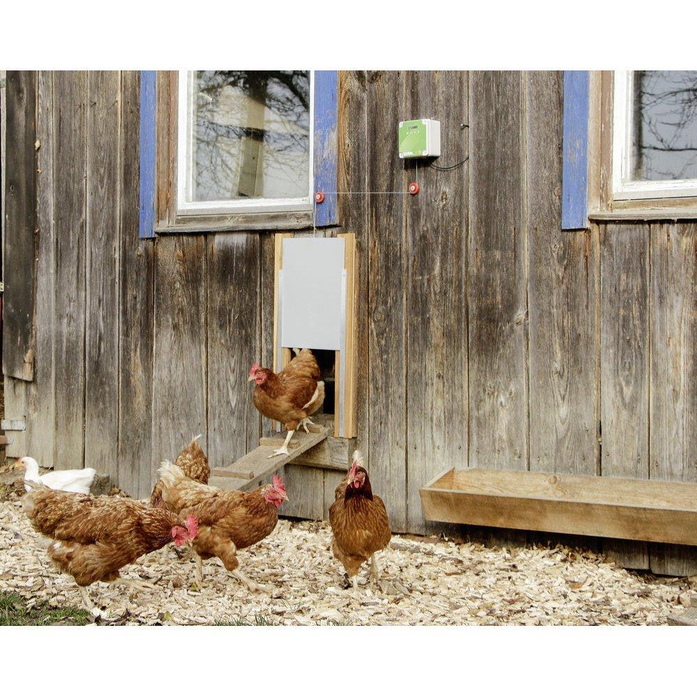 Kerbl Automatische Hühnertür Komplett-Set inkl. Schiebetür, Bild 2