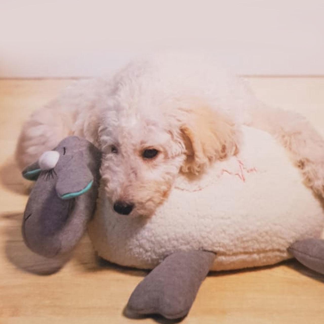 Beeztees Hundespielzeug Puppy Herzschlag, Bild 2