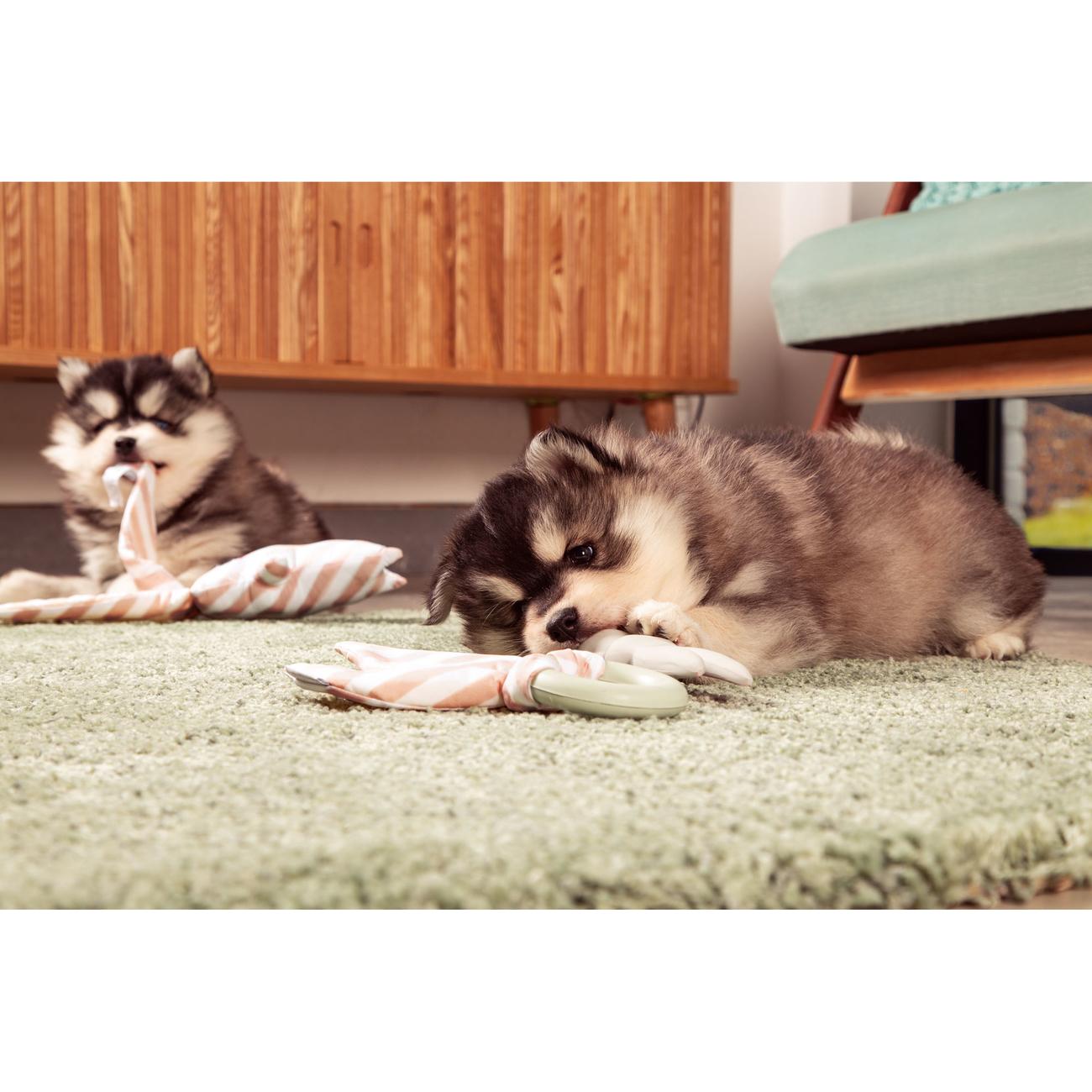 Beeztees Puppy Hase Buddy Welpenspielzeug, Bild 3