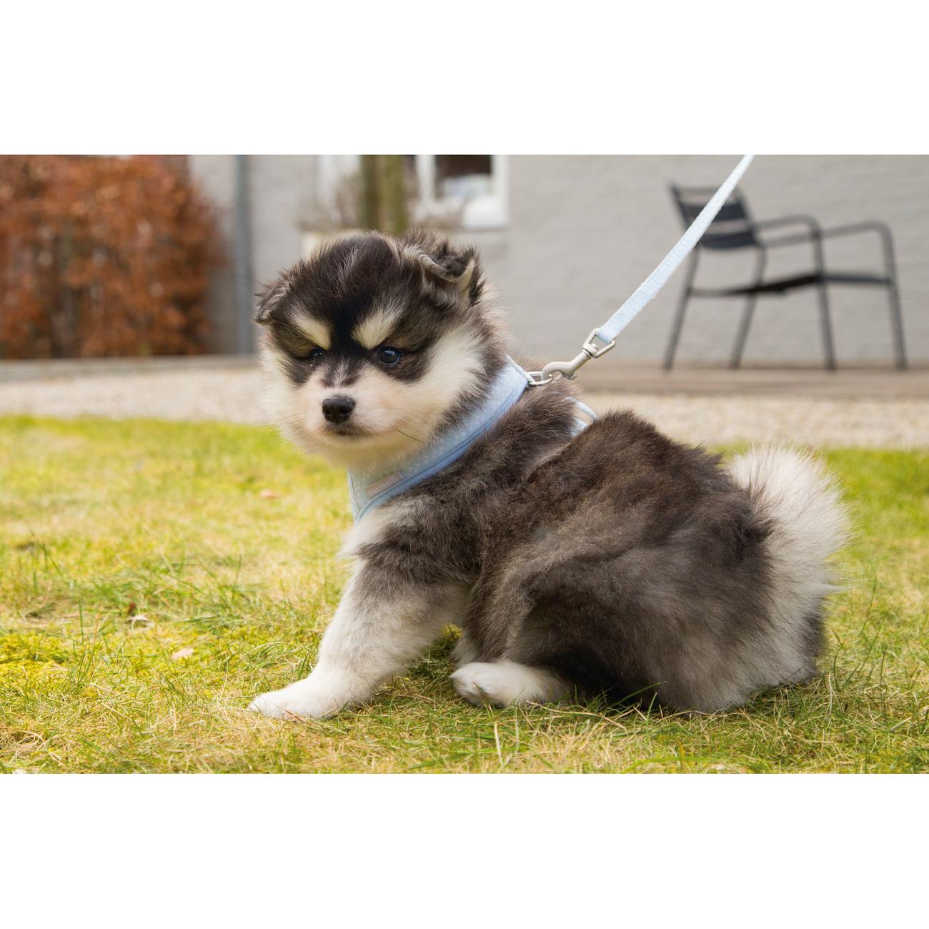 Beeztees Puppy Hundegeschirr für Welpen, Bild 5