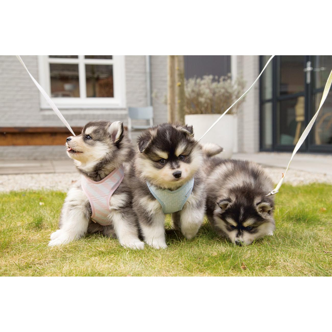 Beeztees Puppy Hundegeschirr für Welpen, Bild 6
